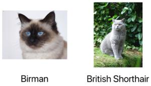 Gato Birman, Gato British Shorthair em exemplo de deep learning